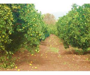 Daños agrícolas por las lluvias