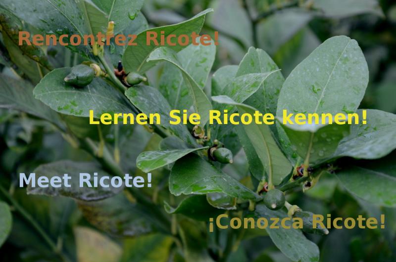 Nuevos folletos con información turística sobre Ricote en cuatro idiomas