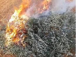 Medidas urgentes en relación a quemas de podas agrícolas durante el estado de alarma por Covid-19